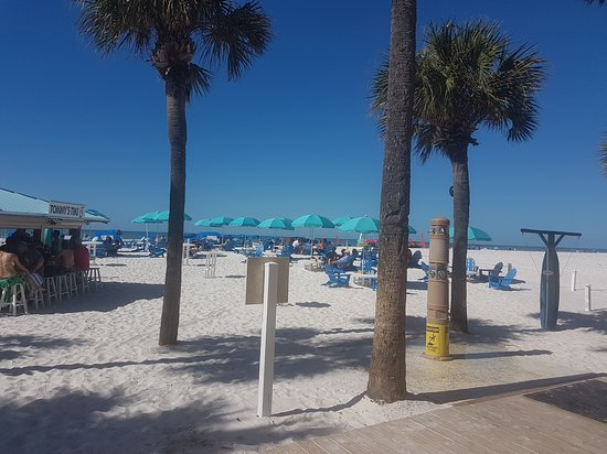 Clearwater Beach: can never beat a good palm tree!