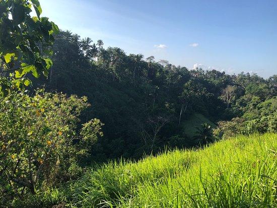 Campuhan Ridge Walk : One of the views