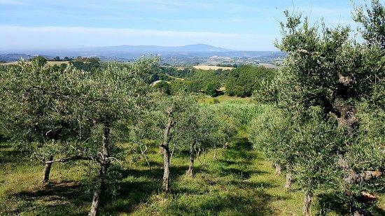 Calvi dell'Umbria, Italia: 20180912_103100_large.jpg