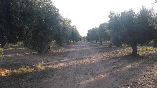 Grisel, Spanien: 20180922_083245_large.jpg