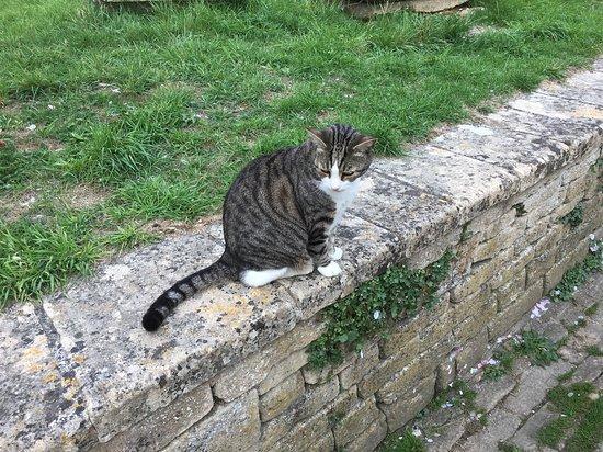 St Cyriac's Church: Cat on church wall.