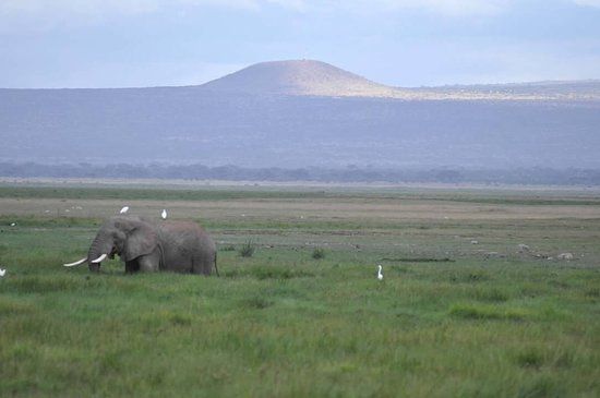 Amboseli National Park, كينيا: The snow has melted on the mountain