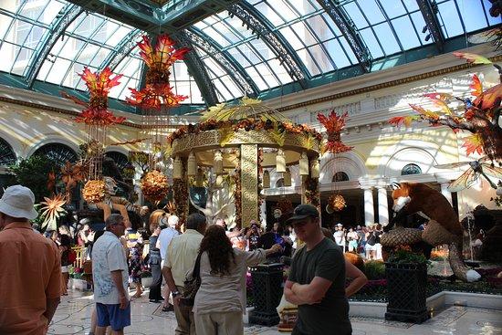 Bellagio Conservatory & Botanical Garden: The Conservatory