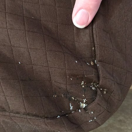 Best Western Plus Dockside Waterfront Inn: Bed bug bites, larvae found on bed skirt, blood stains on sheets from being bit, stains  on corn