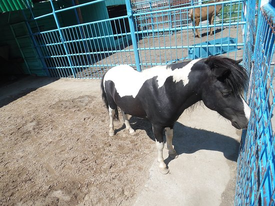 Семипалатинск, Казахстан: horse