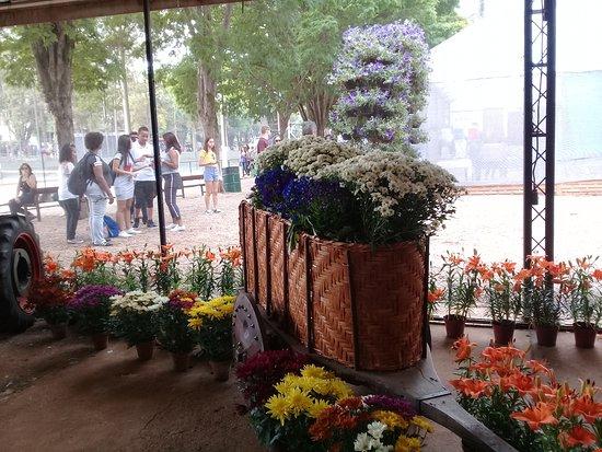 Holambra, SP: Alguns arranjos de flores ao longo do espaço
