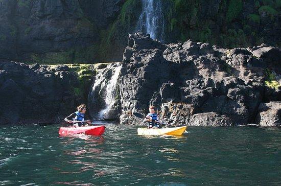 1 heure de visite guidée en kayak : 1 Hour Guided Kayaking Tour