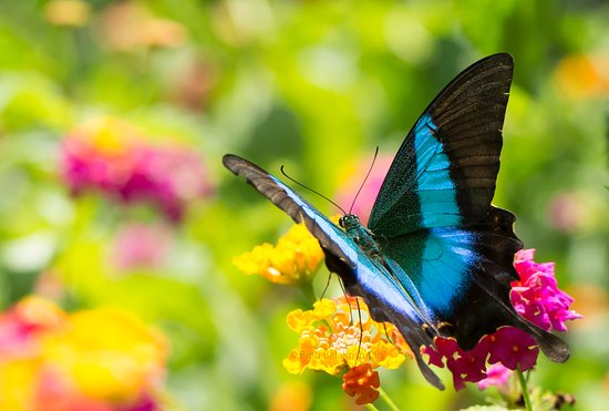 Image result for Sammilan Shetty's Butterfly Park