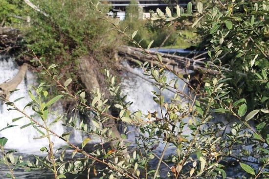 Tumwater Falls Park: Wasserfall