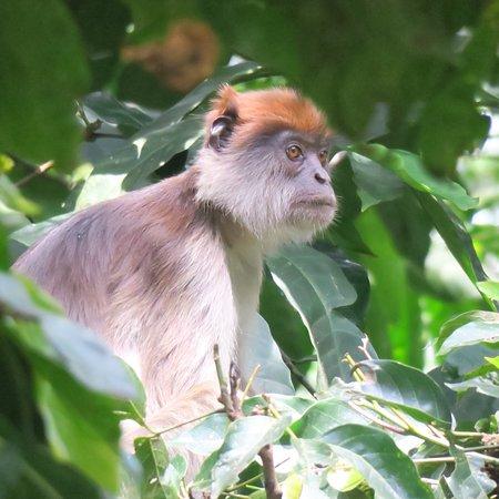 Kibale National Park, Uganda: photo2.jpg