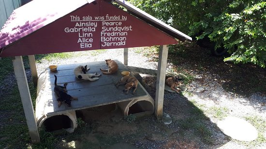 Lanta Animal Welfare Photo