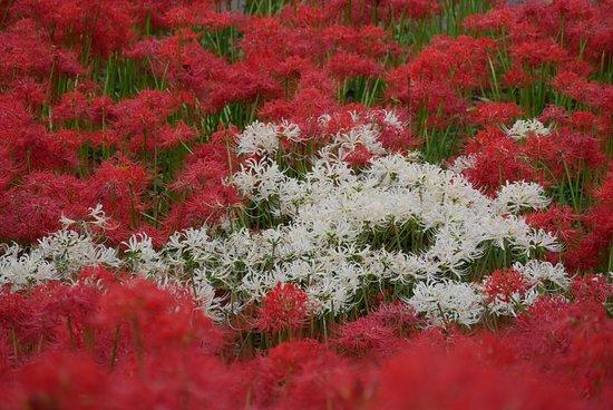 Satte, Япония: 赤と白のコントラスト