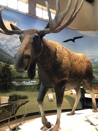 Denali Visitor Center: Plastic Bull Moose