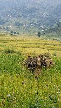 Ta Van, Vietnam: 20180914_114218_large.jpg