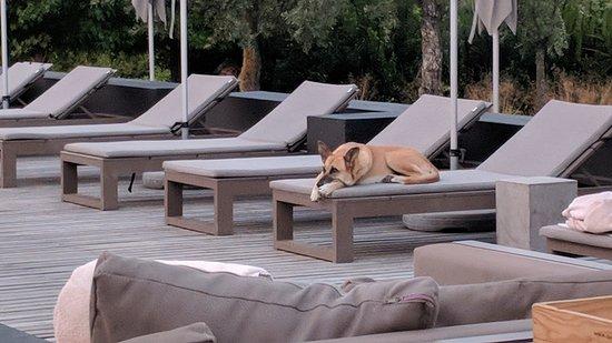 Aqua, the hotel dog - Picture of Six Senses Douro Valley