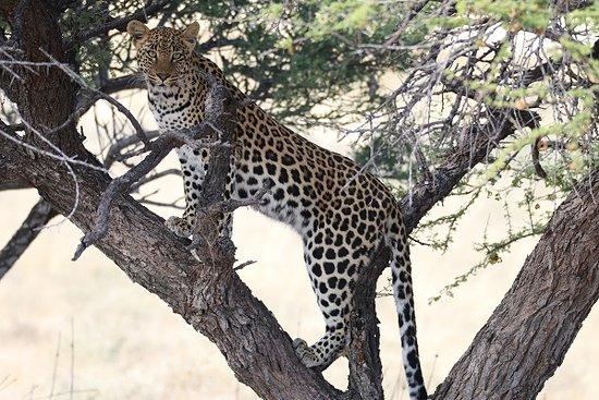 Central Kalahari Game Reserve照片
