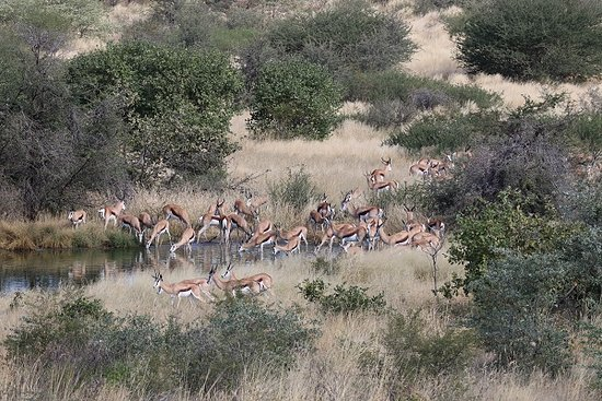 Central Kalahari Game Reserve, Μποτσουάνα: View to the waterhole from the camp