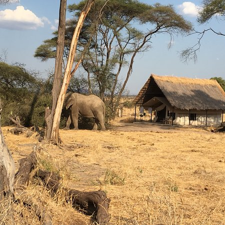 Ruaha National Park, Tanzania: photo1.jpg