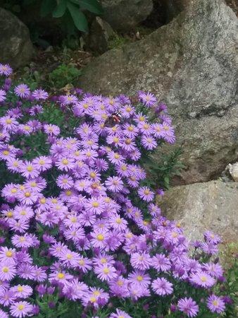 Oasi WWF Giardino Botanico di Oropa: 20180923_122351_large.jpg