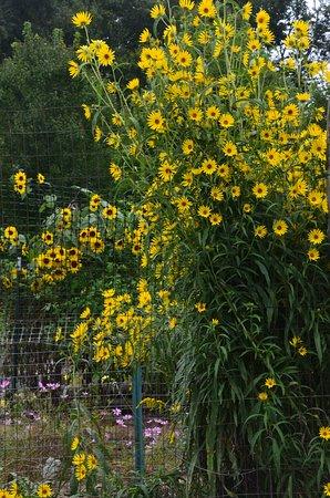 Milton, NY: Millbrook Farm Garden
