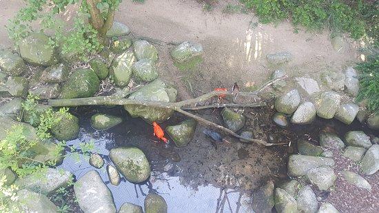 Villars-les-Dombes, فرنسا: Oiseau sousle pont