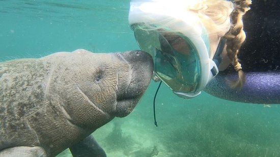 River Ventures Manatee Tour Center: Up close and personal!