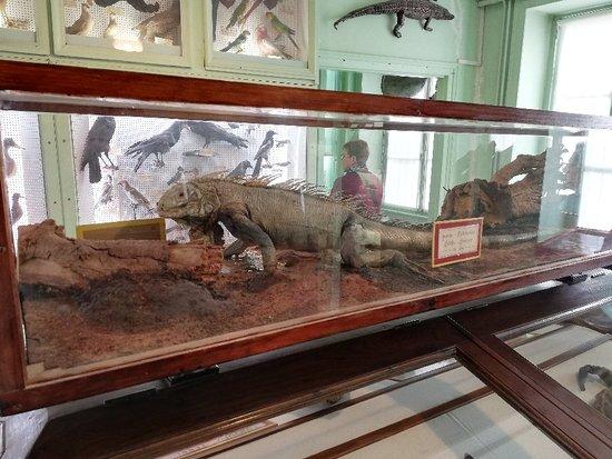 Cherbourg-Octeville, France: Muséum Emmanuel Liais