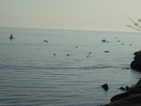 Maro, إسبانيا: Vistas panorámicas de la Playa de Maro