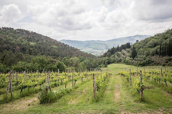 Recorrido vinícola de medio día por...