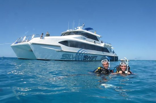 Silverswift Outer Great Barrier Reef...