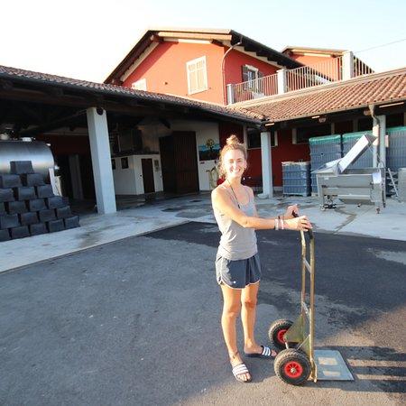 La Morra, Italie : photo2.jpg