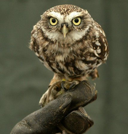 North Somerset Bird of Prey Centre Foto