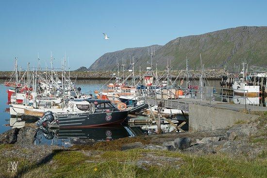 Skarsvag, Norwegia: Skarsvåg, Havna