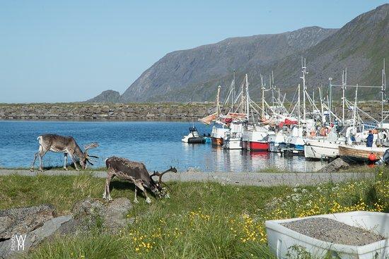 Skarsvag, Norwegia: Havna i Skarsvåg
