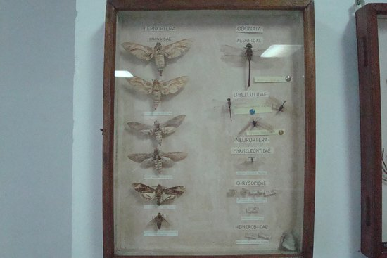 Seychelles Natural History Museum: Lepidoptera