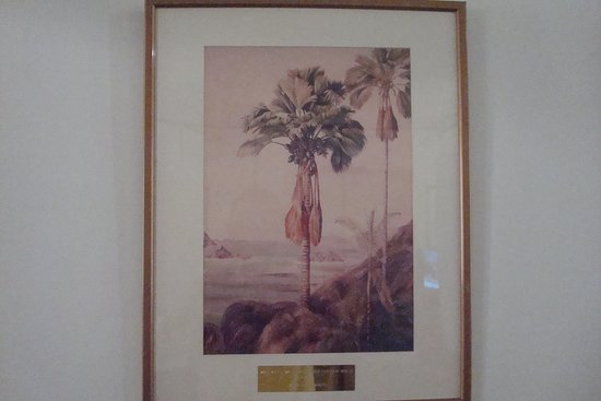 Seychelles Natural History Museum: Male and female tree of the coco de mer (Praslin)