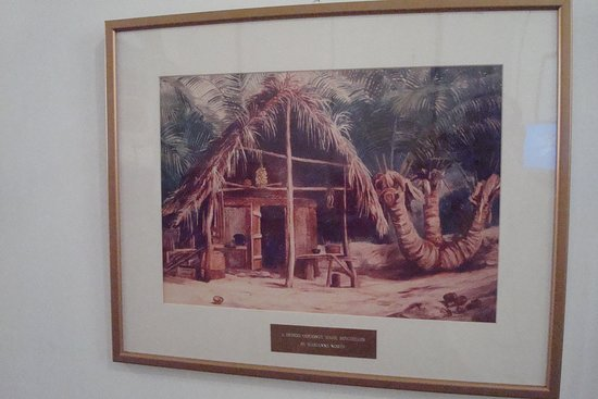 Seychelles Natural History Museum: A Tripod Coconut, Mahé (Marianne North)