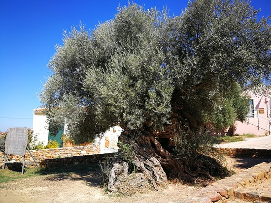 Olive Tree Museum of Vouves