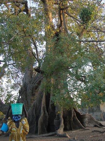 El pueblo de Mar Lodj os espera! Y en él, estos impresionantes árboles sagrados.
