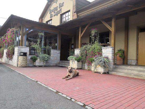 Havirov, Republika Czeska: Čtyřnohý gentleman týmu Restaurace Na Zaguří