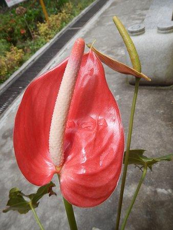 Pondok Brastagi, Indonesien: Flower