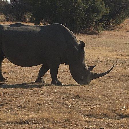 Mabula Private Game Reserve, Sydafrika: photo0.jpg