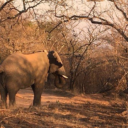 Mabula Private Game Reserve, Sydafrika: photo1.jpg