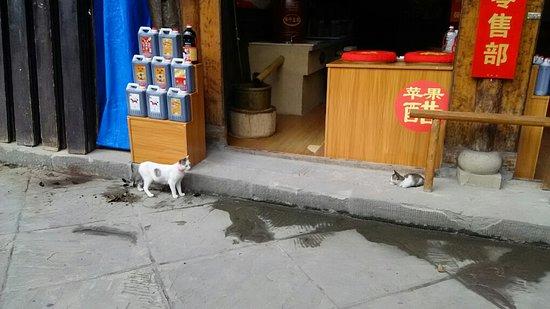 Langzhong, China: 名物のお酢の店の前に猫二匹。左の子は歩行街の軽食店の看板ネコ。