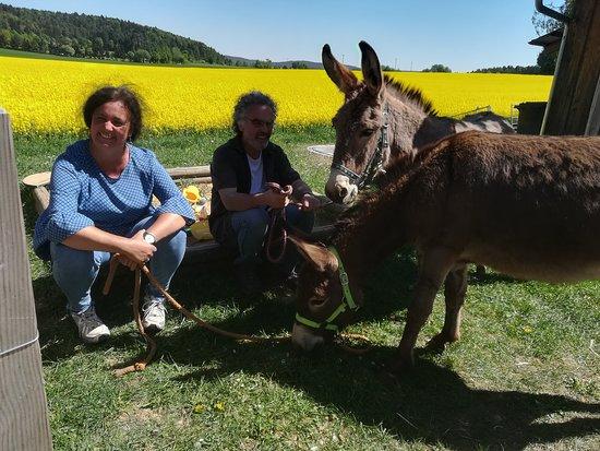 Erlebniscafe Am Samainhof: Unsere Esel bezaubern nicht nur Kinder