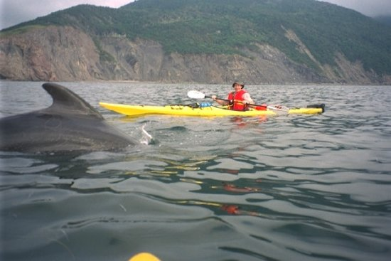 Tangier, Canada: Off Cape Breton (the Pilot whales came to us, no chasing)