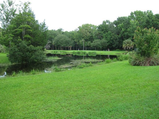 Homosassa Springs, FL: Soggy grass and a muddy pond