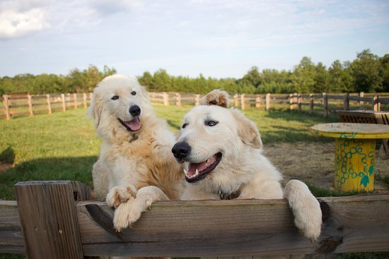 Rutherfordton, Северная Каролина: farm dogs
