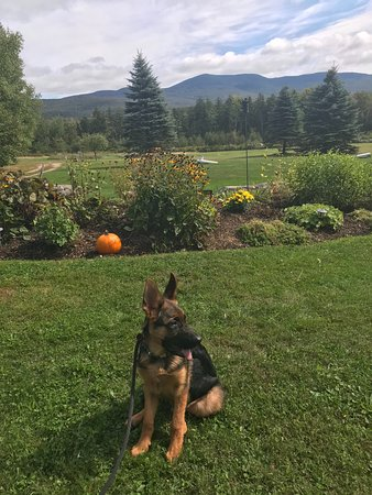 Ripton, VT: Green Mountains
