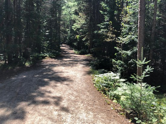 Whitney, Canadá: Hiking Trail in Logging Museum Park